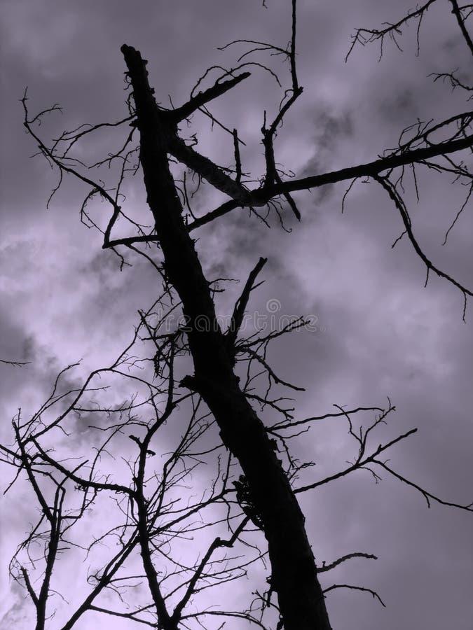 Download Árbol muerto foto de archivo. Imagen de quebradizo, contorno - 1276262
