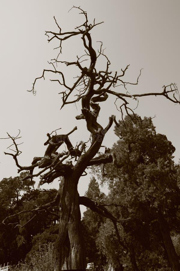Árbol muerto imagenes de archivo