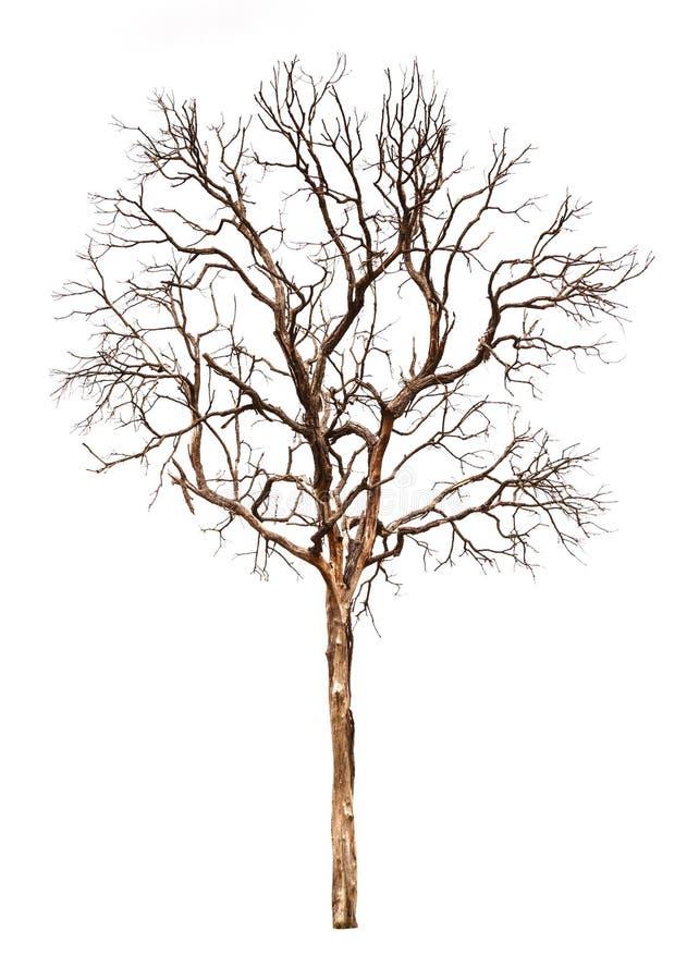 Árbol muerto aislado imagenes de archivo