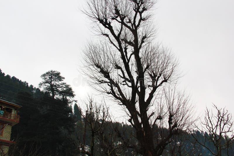 Árbol muerto aislado en la trayectoria blanca del fondo y de recortes fotografía de archivo libre de regalías