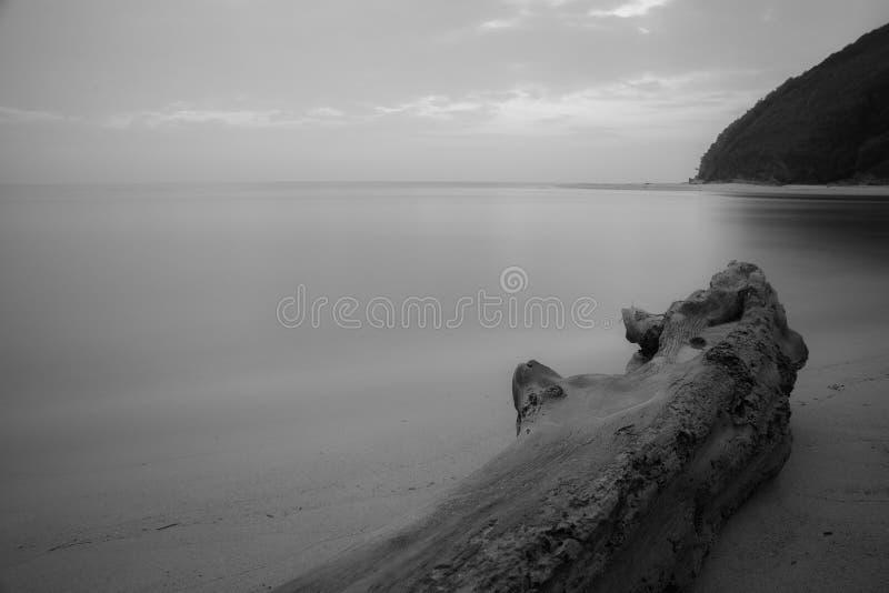 Árbol muerto blanco y negro foto de archivo
