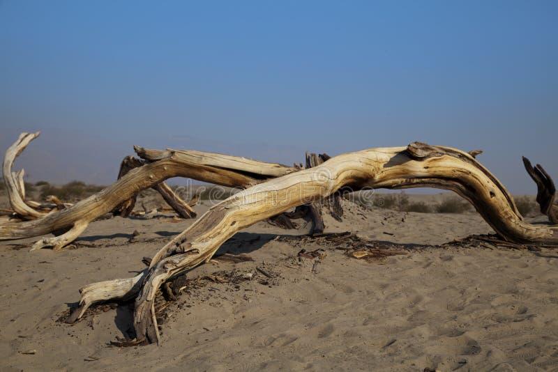 Árbol muerto del desierto foto de archivo