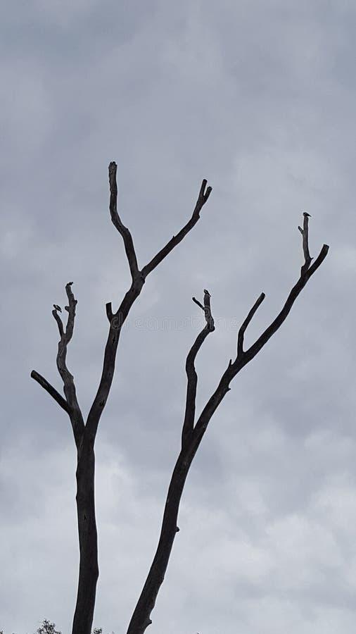 Árbol muerto del mundo ideal imagen de archivo libre de regalías