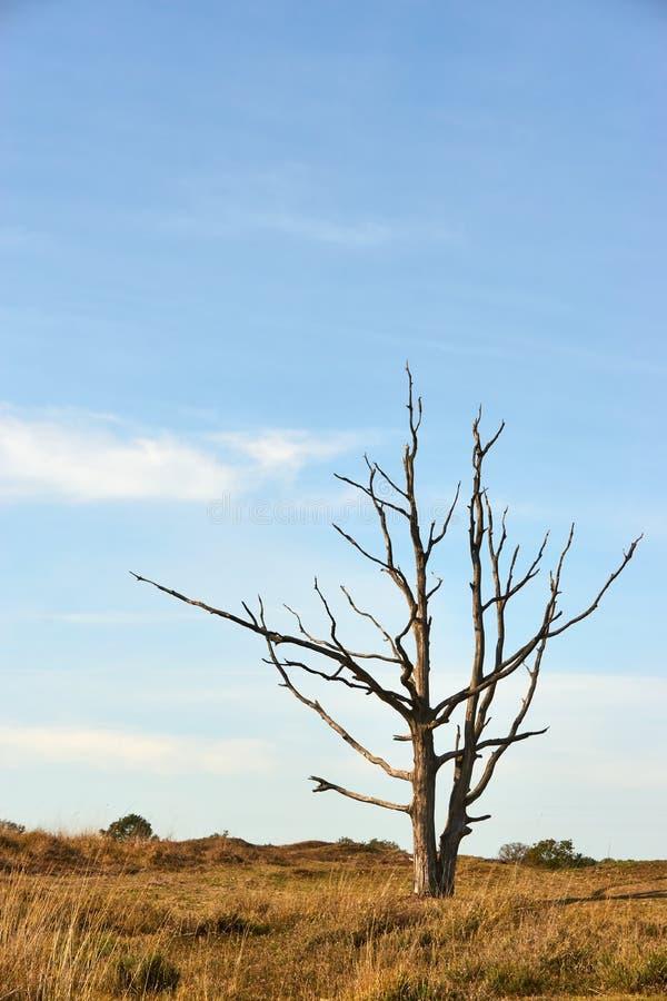 Árbol muerto del solitario en paisaje con un cielo azul imagen de archivo