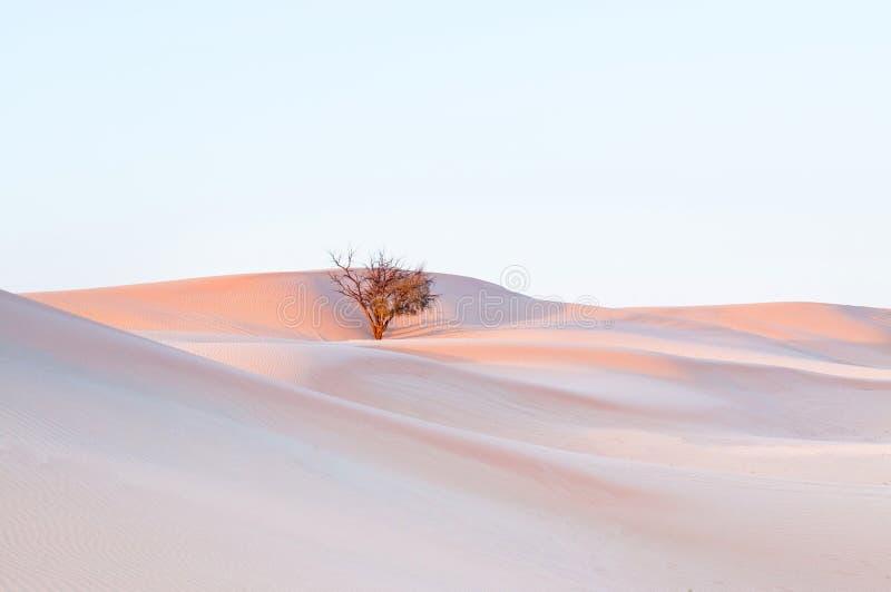 Árbol muerto en desierto imágenes de archivo libres de regalías