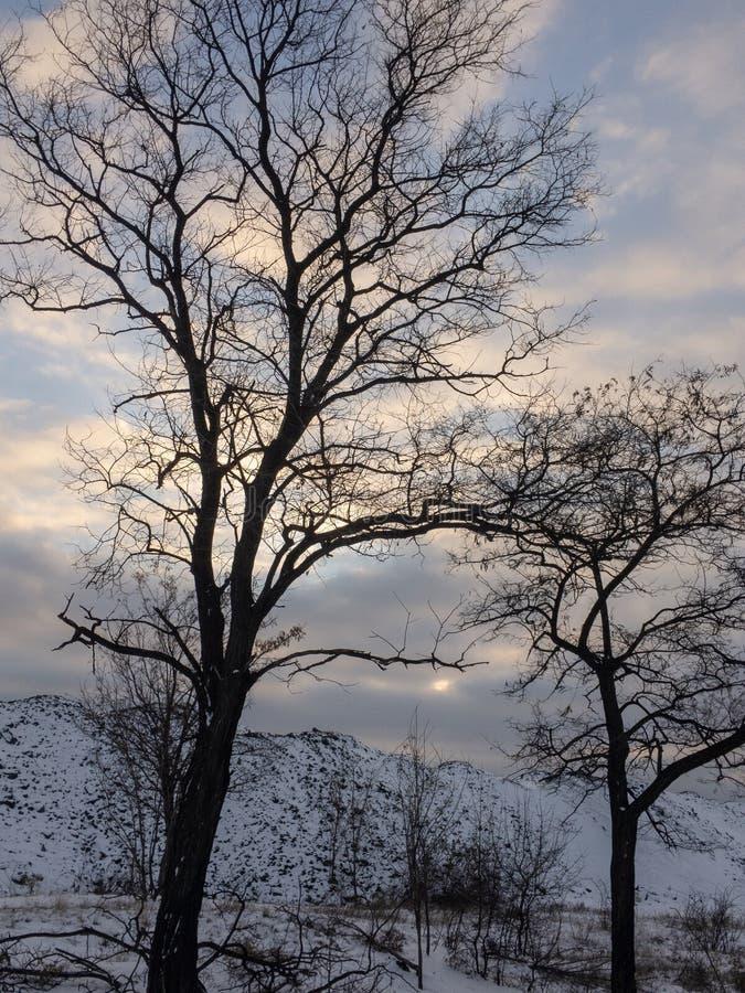 Árbol muerto en el invierno en, fondo del cielo azul foto de archivo libre de regalías