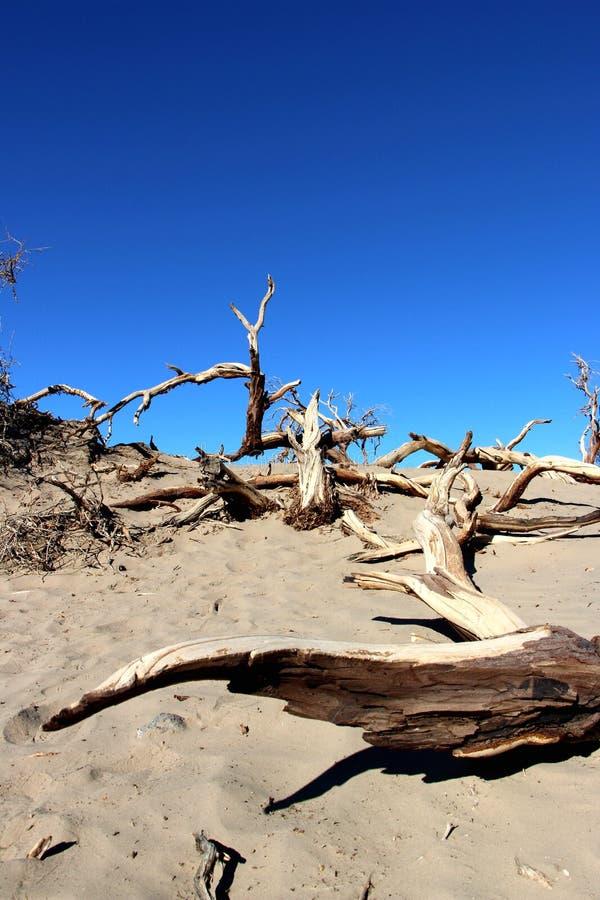 Árbol muerto en el parque nacional de Death Valley, California imagen de archivo libre de regalías
