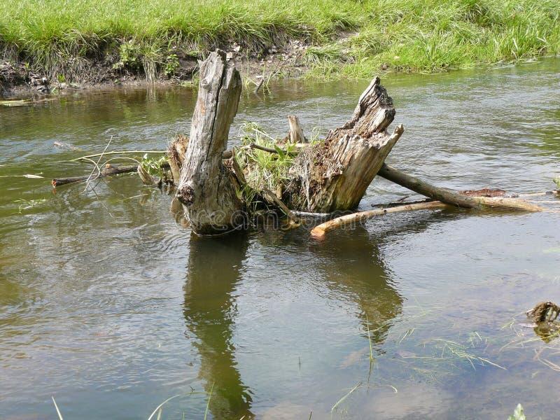 Árbol muerto en el río imagenes de archivo