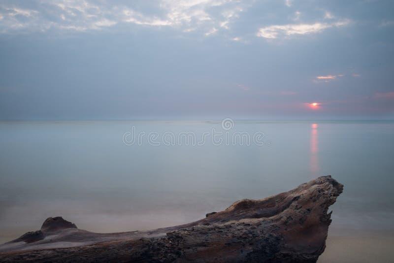 Árbol muerto en la playa foto de archivo