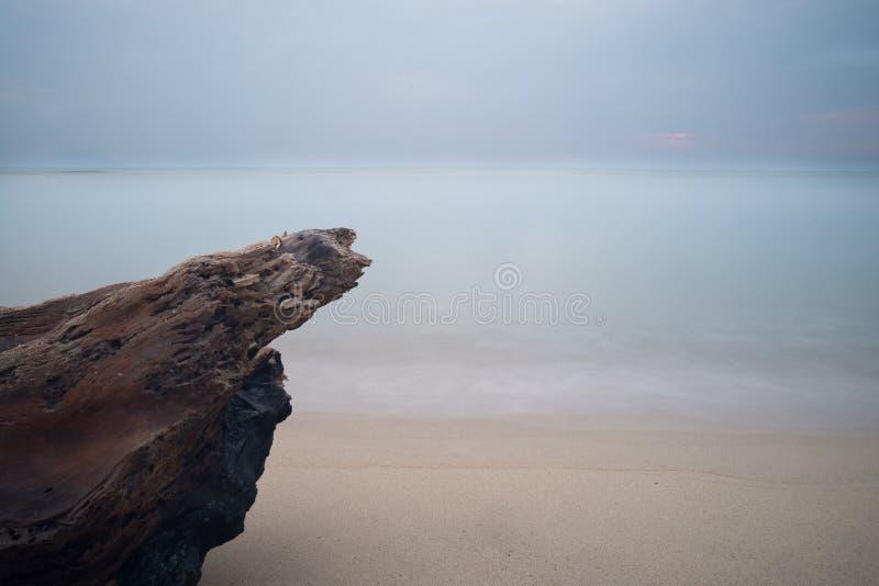 Árbol muerto en la playa imagen de archivo