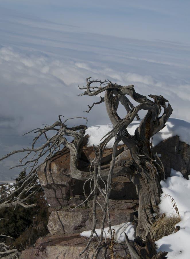 Árbol muerto en montañas del invierno imagenes de archivo