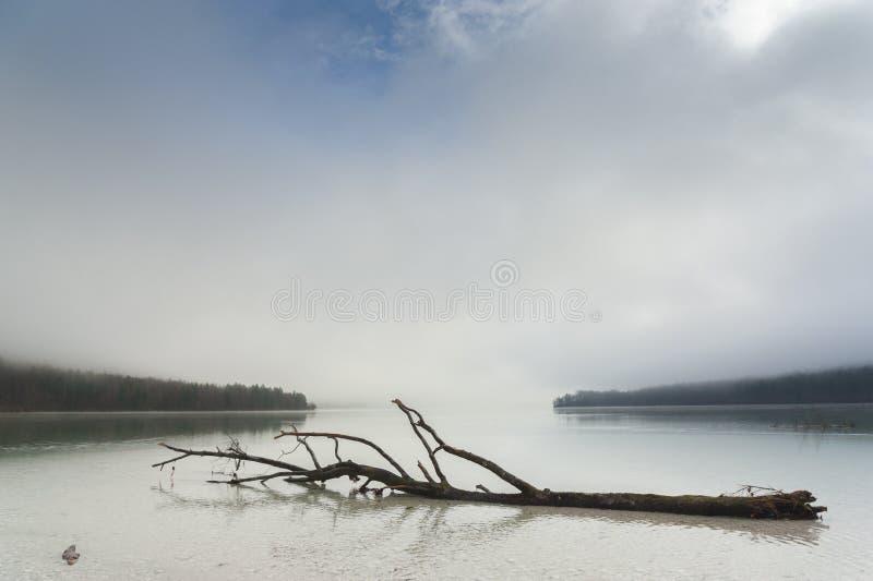 Árbol muerto en superficie del lago foto de archivo libre de regalías