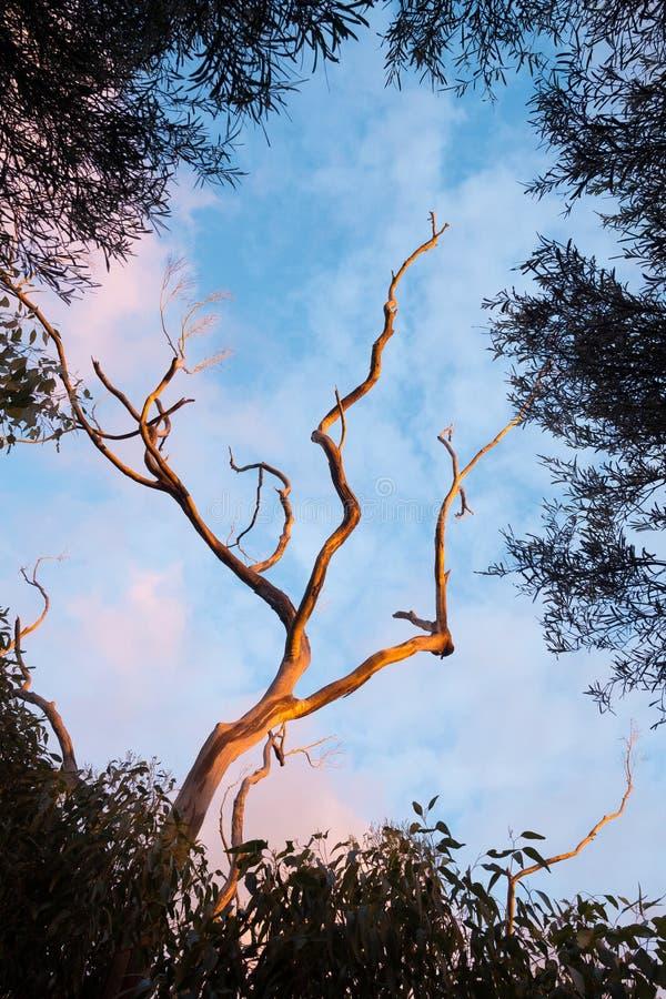 Árbol Muerto Enmarcado Por Los árboles Frondosos Foto de archivo ...