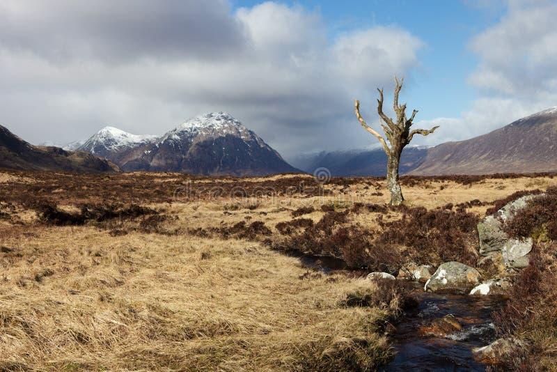 Árbol muerto - Escocia imágenes de archivo libres de regalías
