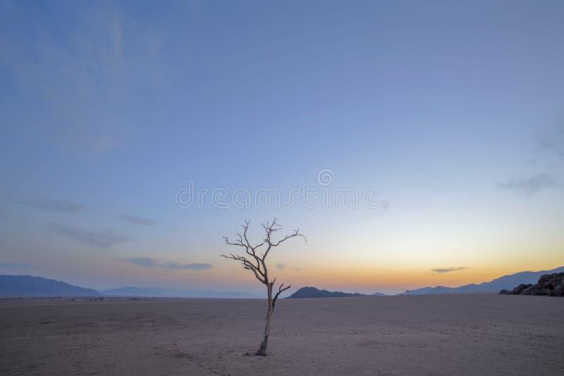 Árbol muerto solitario antes de la salida del sol foto de archivo