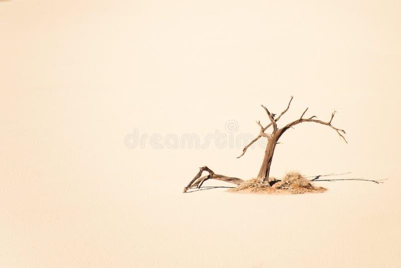 Árbol muerto solitario en Vlei ocultado arena amarilla, Sossusvlei, Namibia imagen de archivo libre de regalías