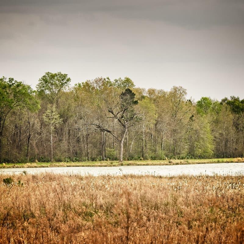 Árbol muerto solitario por el lago imagen de archivo