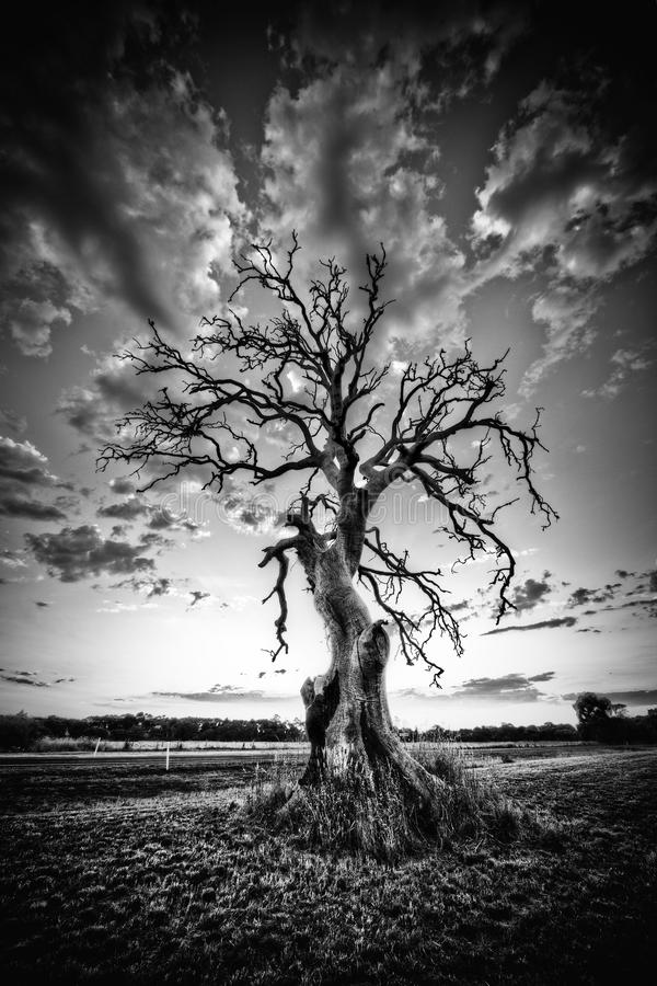 Árbol muerto solo en la carretera del país en el negro, blanco imagen de archivo libre de regalías