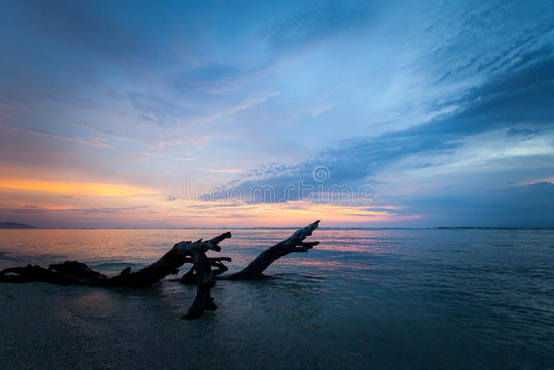 Árbol muerto texturizado en el mar en la puesta del sol fotografía de archivo libre de regalías