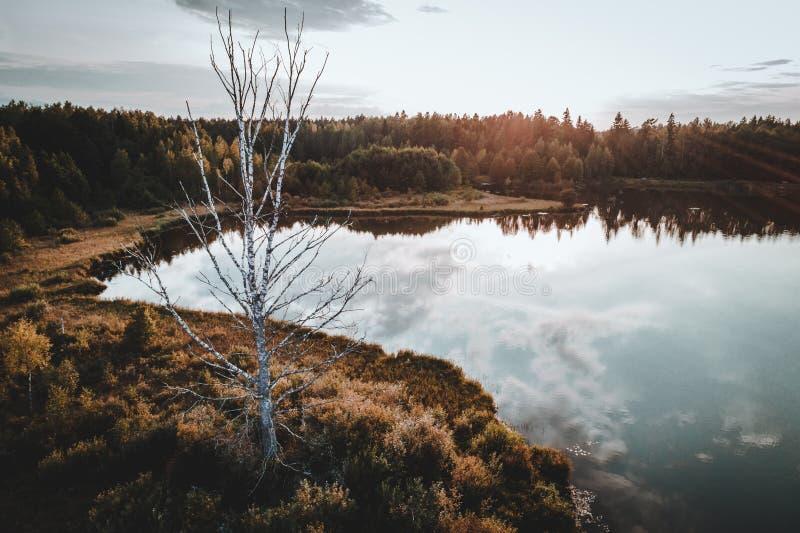 Árbol muerto viejo en el bosque cerca del lago en la puesta del sol imagenes de archivo