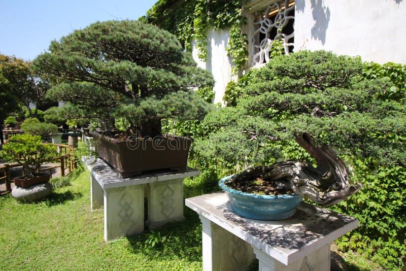 Árbol muy viejo de Bonsai en el jardín en Shanghái, China imagen de archivo libre de regalías