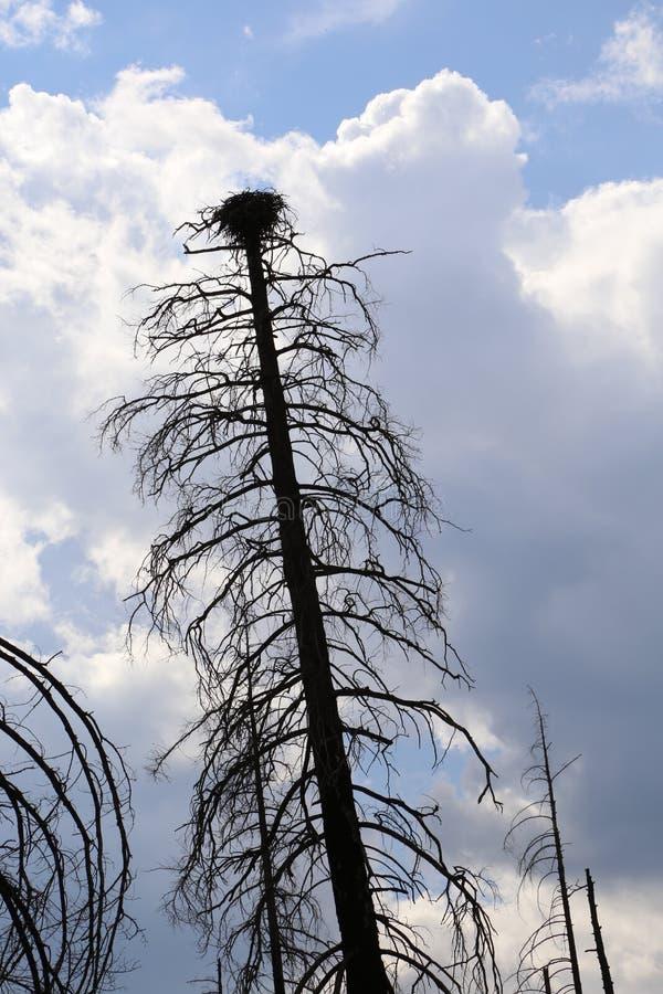 Árbol negro con una jerarquía del pájaro, con un cielo azul fotografía de archivo libre de regalías