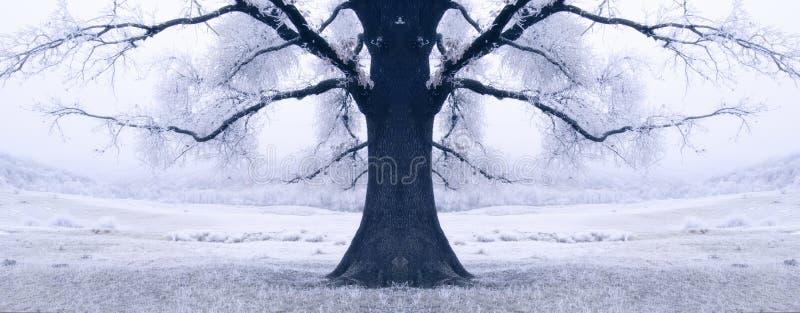 Árbol negro rodeado por la nieve en invierno foto de archivo libre de regalías