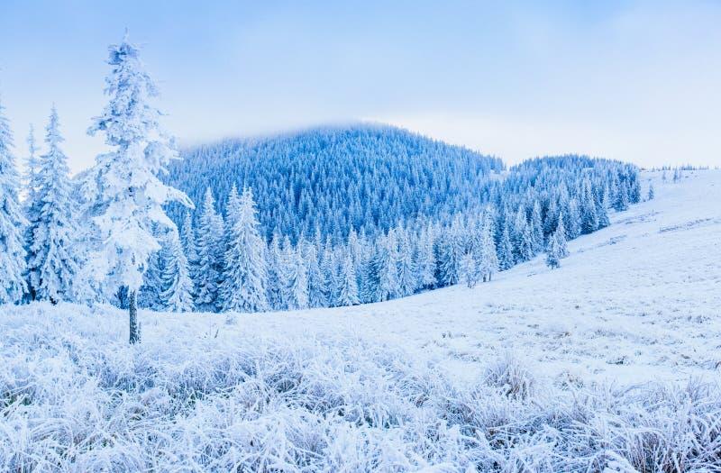 Árbol nevado del invierno mágico fotografía de archivo