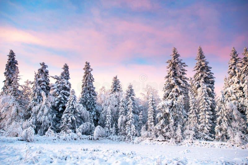 Árbol nevado del invierno mágico fotografía de archivo libre de regalías