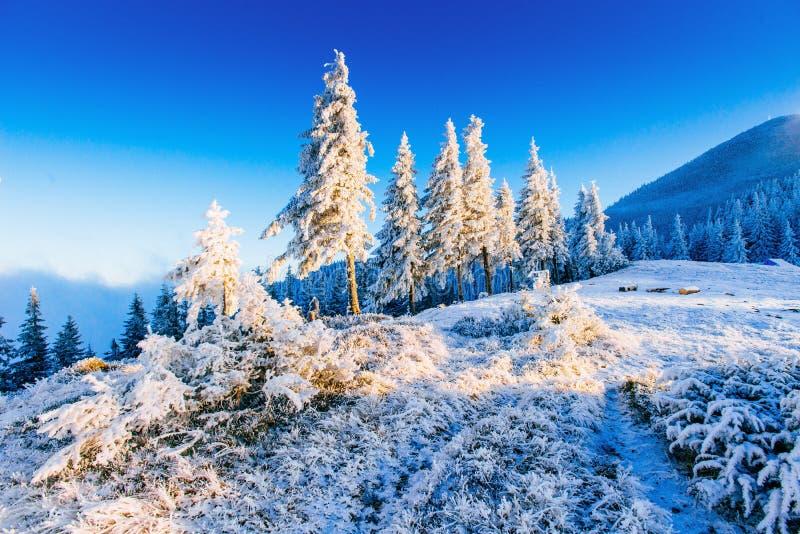 Árbol nevado del invierno mágico imagen de archivo