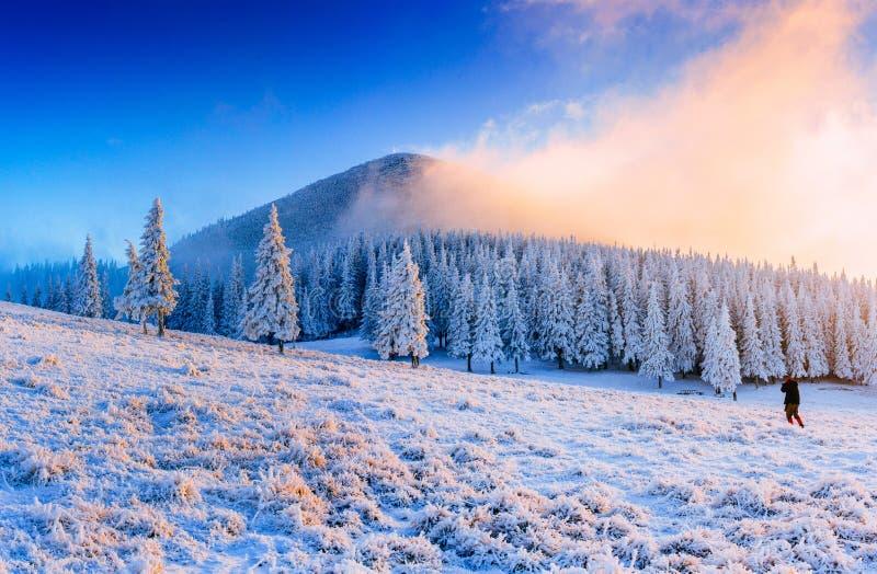 Árbol nevado del invierno mágico Cárpato, Ucrania, Europa fotos de archivo