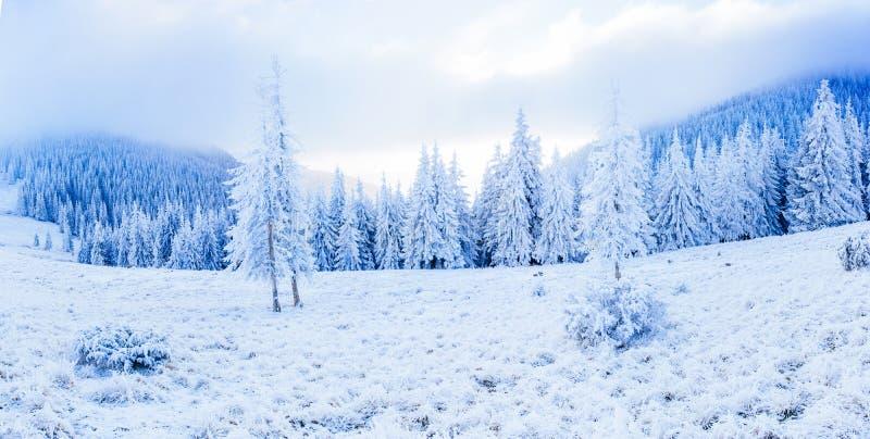 Árbol nevado del invierno mágico La belleza del mundo cárpatos ucrania europa imagen de archivo