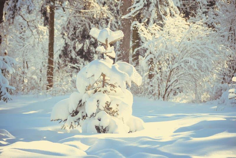 Árbol nevado en bosque imagenes de archivo