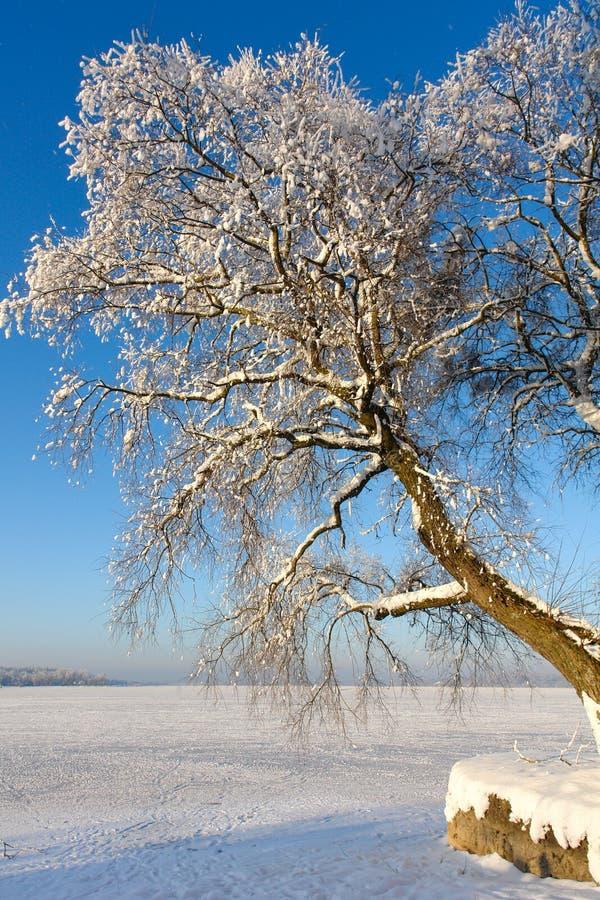 Árbol Nevado en el lago congelado I fotos de archivo