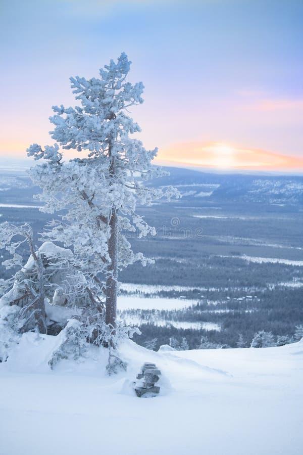 Árbol Nevado en la mañana del amanecer/del invierno fotos de archivo