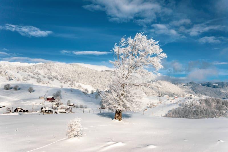 Árbol nevado en los Cárpatos en el pueblo tradicional Sirnea foto de archivo