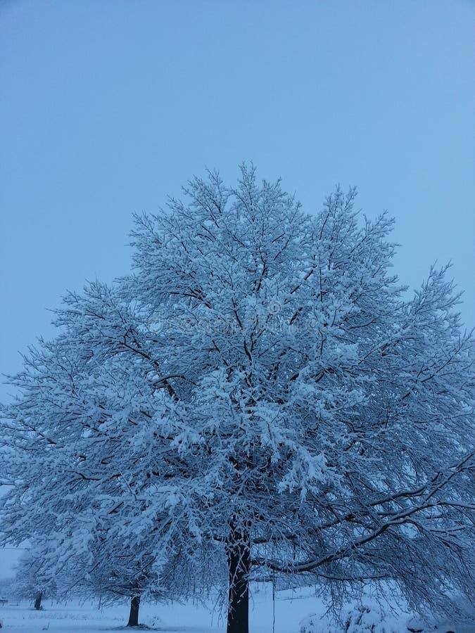 árbol nevoso fotografía de archivo