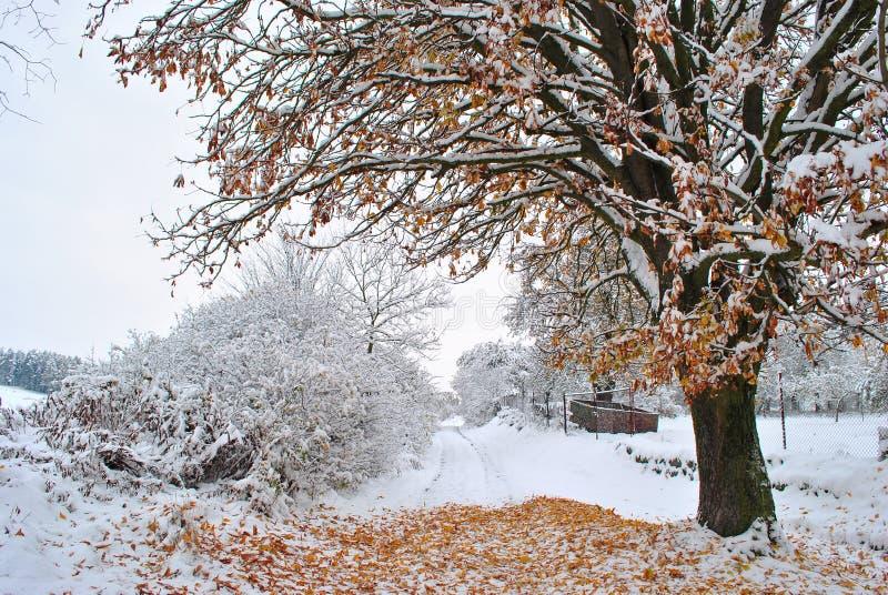 árbol nevoso fotos de archivo