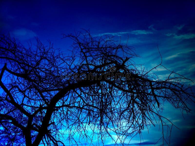 Árbol Oscuro Foto de archivo