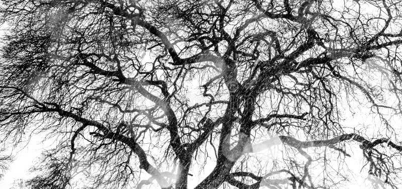 Árbol oscuro en blanco y negro imagen de archivo libre de regalías