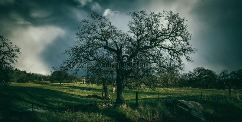 Árbol oscuro fantasmagórico en nubes de tormenta foto de archivo