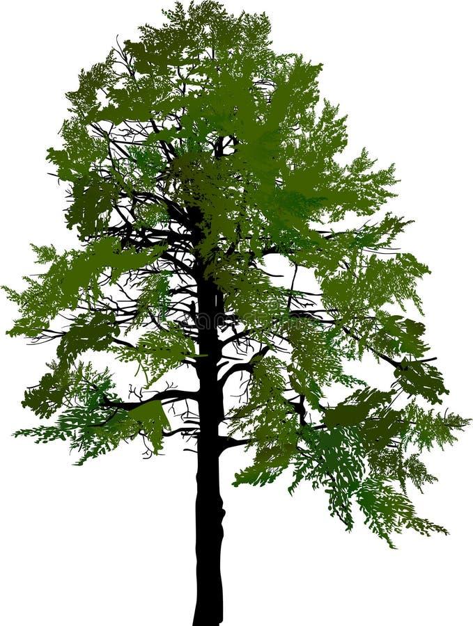 Árbol oscuro verde grande del pino aislado en blanco ilustración del vector