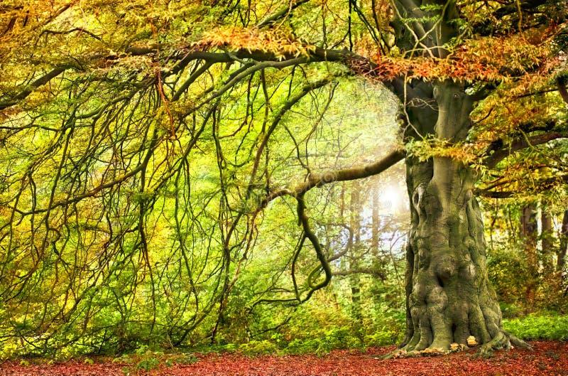 Árbol otoñal grande fotografía de archivo libre de regalías