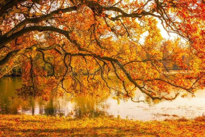 Árbol por el lago durante otoño en el parque de Lednice fotos de archivo
