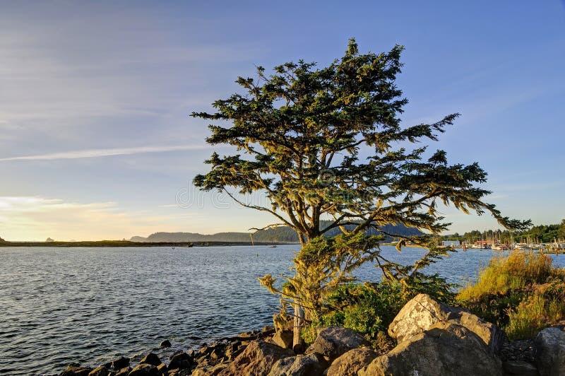 Árbol por el mar en la puesta del sol imagenes de archivo