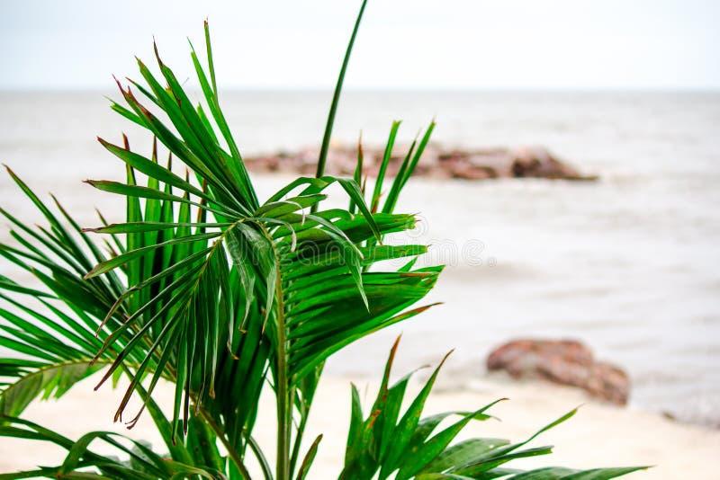 Árbol por el mar solo fotografía de archivo libre de regalías