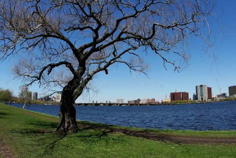 Árbol por el río fotos de archivo