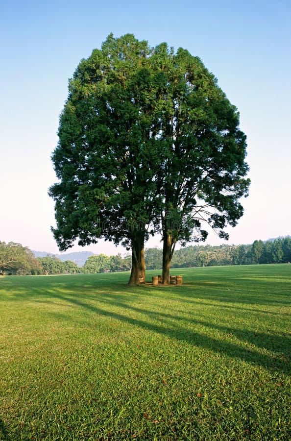 Árbol por la mañana fotos de archivo libres de regalías
