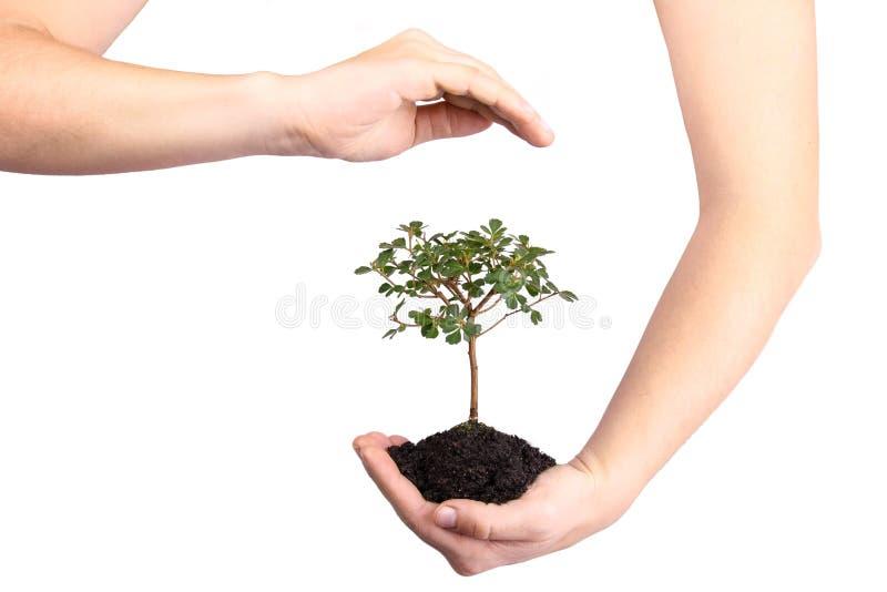 Árbol protegido foto de archivo