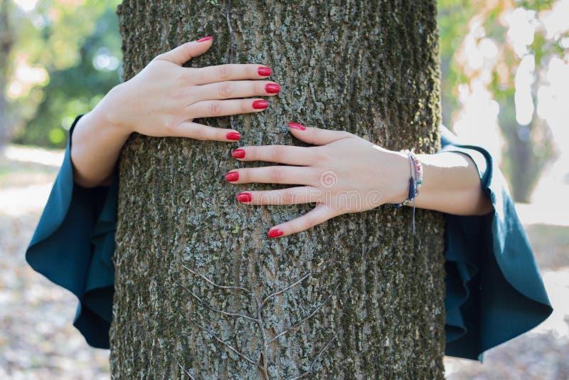 Árbol que abraza a la mujer manos femeninas jovenes que abrazan un árbol enorme adentro fotos de archivo